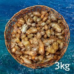 오만둥이(통영산) 3kg (냉동)